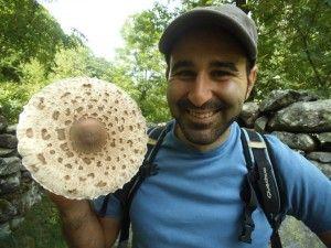 Muflo fungus 2