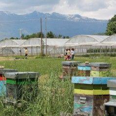 Natural healing, telepathy with bees